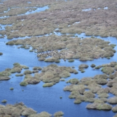 UNSW Global Water Institute Research Wetlands - Nimmie Caira