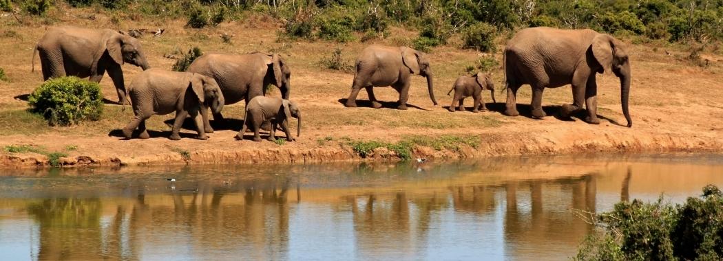 africa-african-animals-59989