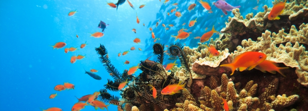 bigstock-Fish-Swimming-around-Sea-Anemo-6456207