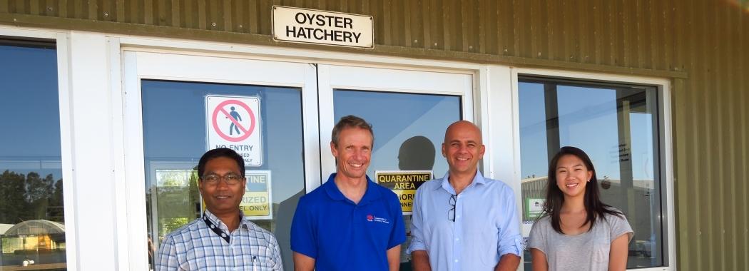A/Prof Jes Sammut Oyster group