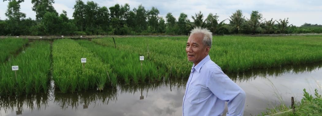 Rice plot trials