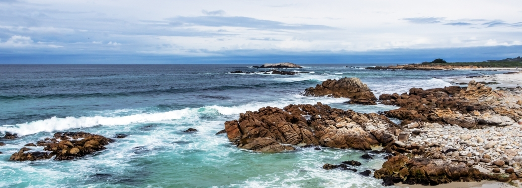 New leadership role for award-winning marine scientist Emma Johnston