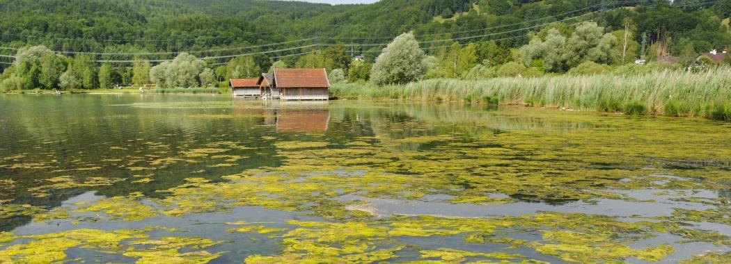 bioMASS lab explores potential benefits of algae and toxic cyanobacteria