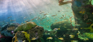 Aquatic ecosystems and biodiversity