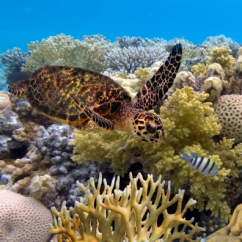 Global water institute - Emma Johnston - Great Barrier Reef